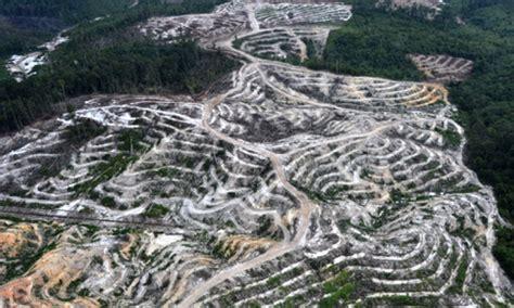 déforestation greenpeace devant le siège de bolloré