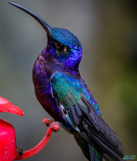 crazy cool colored hummingbird flora fauna pinterest
