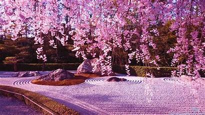 Japanese Sakura Blossom Cherry Naruto Wallpapers Japan