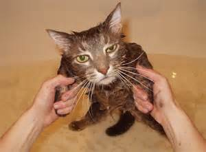 cat wash me november 2012 this ain t even