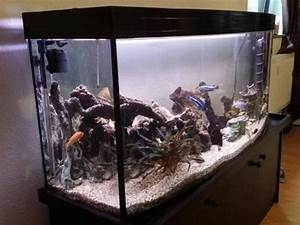 Komplett Aquarium Kaufen : komplett panorama aquarium mit zubeh r in m lheim an der ruhr fische aquaristik kaufen und ~ Eleganceandgraceweddings.com Haus und Dekorationen
