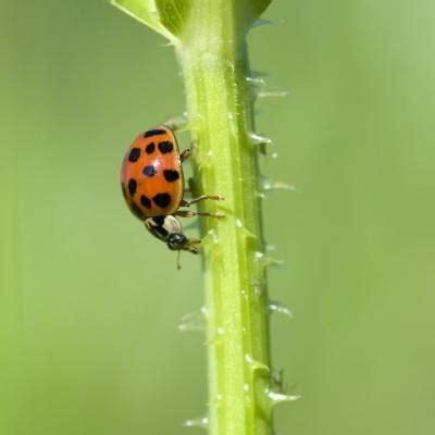 Pest Control For Your Herb Garden  Herb Garden Design