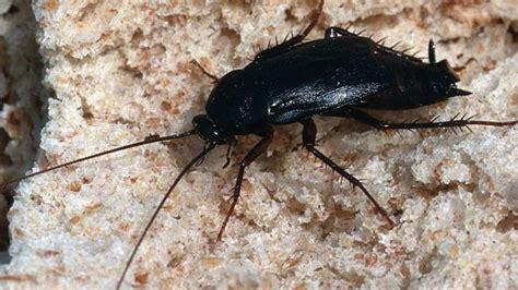 badezimmer amazon kakerlaken bekämpfen tipps gegen schaben in haus und wohnung