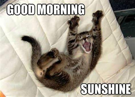Morning Cat Meme Morning Cat Meme 28 Images Smile Its Friday