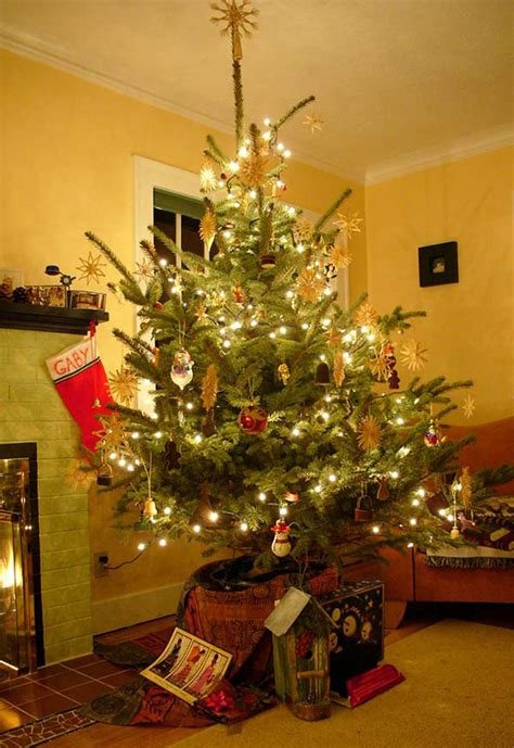 tis  season  plant  christmas treesor