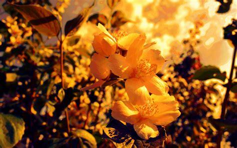 yellow flowers backgrounds - HD Desktop Wallpapers | 4k HD
