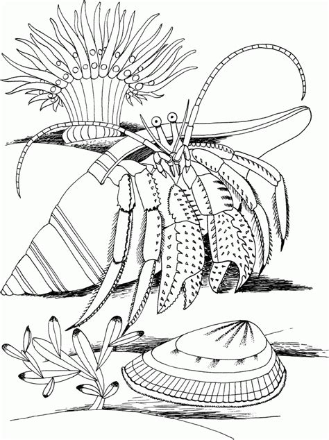 printable hermit crab coloring pages  kids
