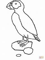 Puffin Coloring Pages Printable Clipart Template Popular Penguin Sketch sketch template