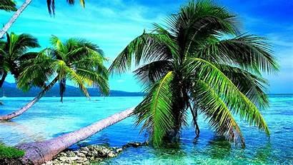 Palm Tree Ocean Background Nature Wallpapers Desktop