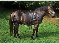 National Animal Of Canada Canadian Horse 123Countriescom