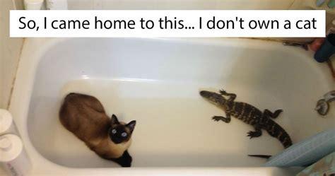 dont   cat moments