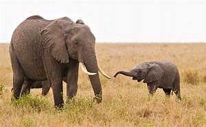 Zenfolio | Keith Kennedy Photography | Masai Mara ...