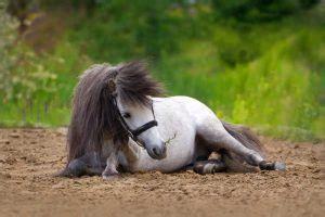 ohrspeicheldruesen beim pferd entzuendung oder parotitis