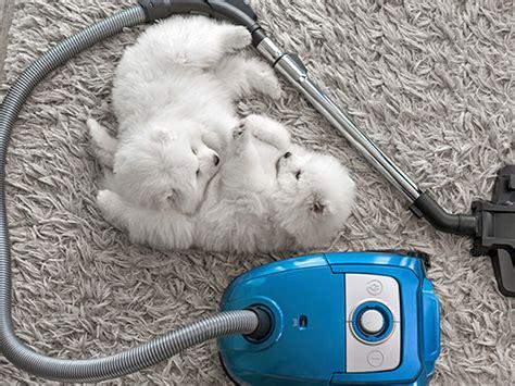 vacuum cleaner  pet hair  hardwood  carpet