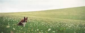 Urlaub Mit Hund Nordrhein Westfalen Unterkunft Mit