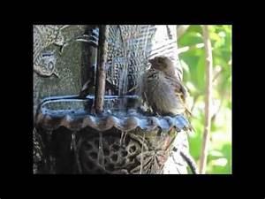 Abreuvoir A Oiseaux Pour Jardin : fontaine murale pour oiseaux 2016 youtube ~ Melissatoandfro.com Idées de Décoration