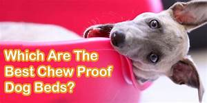5 best chew proof dog beds for chewers the dog clinic for Good dog bed for chewers
