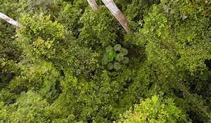 ECOWAS Dialogue on forests: Ghana Forest stakeholders ...