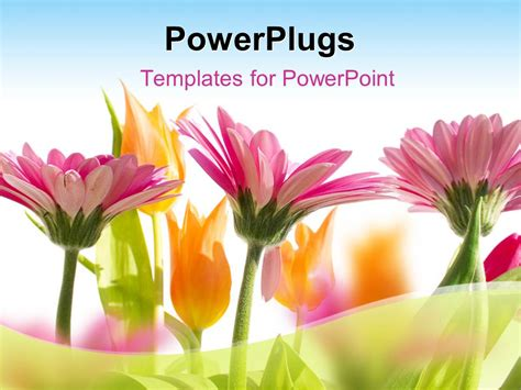 powerpoint template multi color flowers blossom  spring
