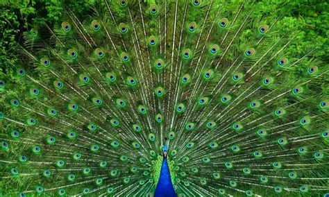 Beautiful Birds: 10 Most Attractive Species on the Planet!