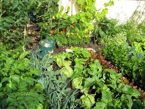 Summer Vegetable Garden Selection Of Plant To Grow