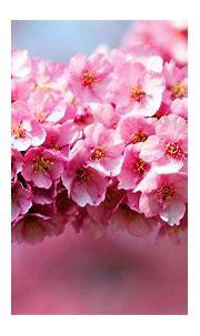 Flower Wallpapers HD | PixelsTalk.Net