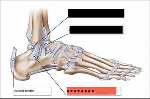 Ankle and Foot - Physical Therapy Kines with Pai at ...  Calcaneofibular