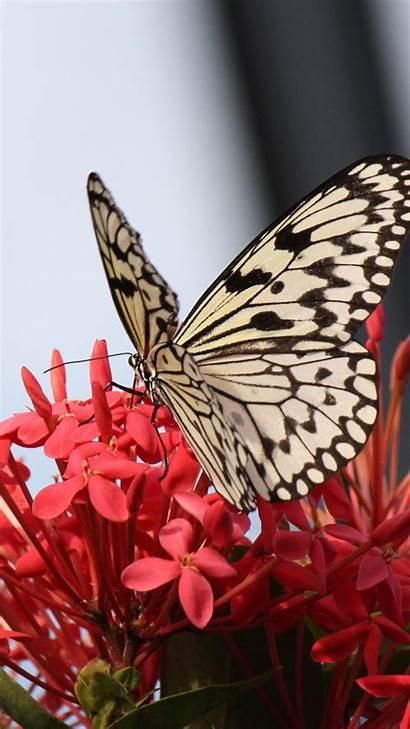 Butterfly Flowers Iphone Flower Butterflies Wallpapers Birds