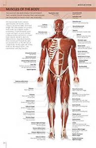 The Concise Human Body Book: An Illustrated Guide to Its ...