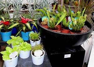 Jardinerie Belgique Frontiere : annuaire publicit ~ Nature-et-papiers.com Idées de Décoration