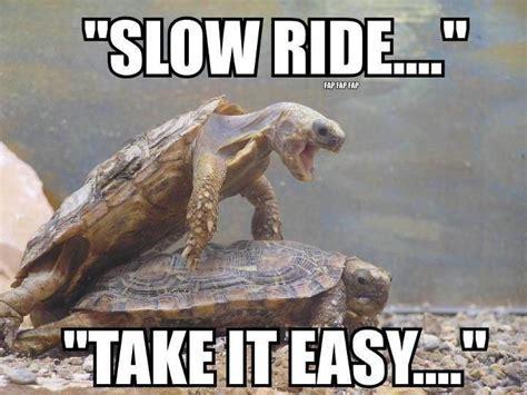 Funny Turtle Memes - slow ride take it easy turtle humor turtles pinterest