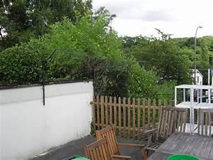 katzennetz system im garten katzennetze nrw der With katzennetz balkon mit dreispitz hut garde