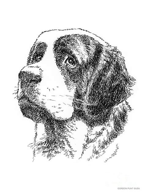 saint bernard drawing drawing  gordon punt