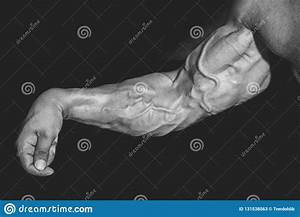 Arm With Muscles  Biceps  Triceps And Veins On Black Background Stock Image