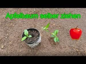 Tomaten Selber Ziehen : apfelbaum aus kern selber ziehen samen vom apfel richtig einpflanzen anleitung youtube ~ Whattoseeinmadrid.com Haus und Dekorationen