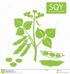 Soybeans Silhouette. Vector Illustrations Set On A White ...