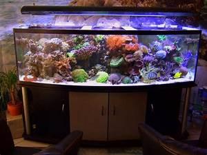 Komplett Aquarium Kaufen : 1000 liter meerwasser komplett aquarium in erpolzheim fische aquaristik kaufen und verkaufen ~ Eleganceandgraceweddings.com Haus und Dekorationen