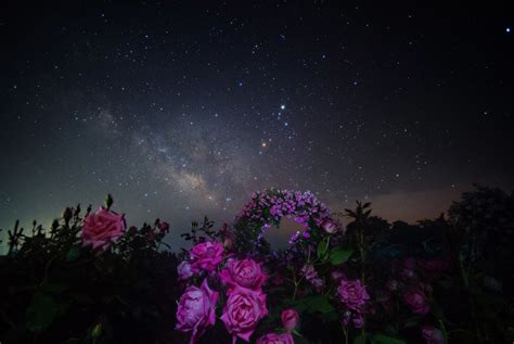 space star night milky  flower roses hd wallpaper