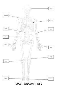 Body Parts Diagram For Kindergarten