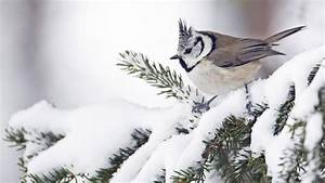 Cute Birds in Winter Milad Nasri