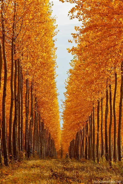 chance    autumn colors   boardman tree farm