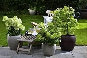 Kuebelpflanzen Fuer Terrasse : winterharte geh lze f r die k belbepflanzung k belpflanzen k belpflanzen b ume garten und ~ Orissabook.com Haus und Dekorationen