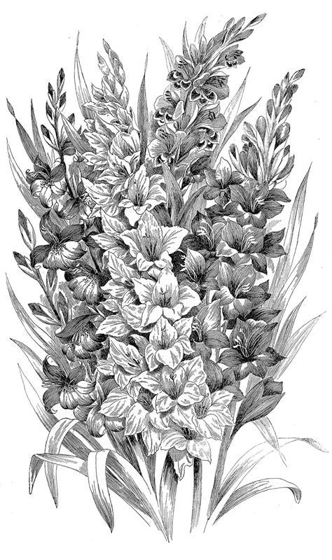 vintage clip art black  white gladiolus engraving  graphics fairy