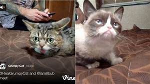 Lil Bub and Grumpy Cat Met and We're All Still Alive?