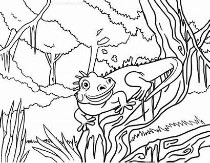 Iguana Coloring Pages Printable Sheets Cool2bkids Realistic