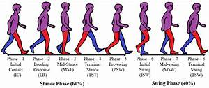Phases Of The Gait Cycle  Right Leg  Red Color  Considered