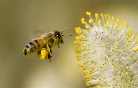 How Many Flowers Can A Bee Pollinate?