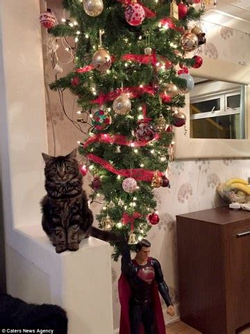 cat  family  turn christmas upside  petsladycom