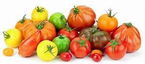 Tomaten Krankheiten Bilder : tomaten einkauf und kennzeichnung bzfe ~ Frokenaadalensverden.com Haus und Dekorationen