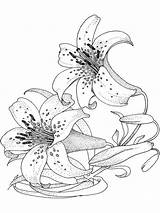 Coloring Pages Flower Lily Adult Flowers Colouring Sheets Printable Lilies Blumen Ladybug Bing Recommended Printables Anycoloring Gemerkt Ocoloring Von sketch template